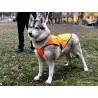 Накидка (попона) для собак велика (1026) оранжева